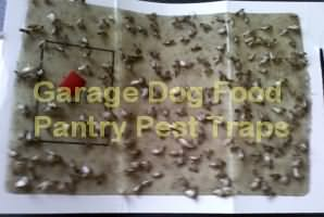 Fast Pantry Pest Traps