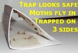 Moth Traps that Work