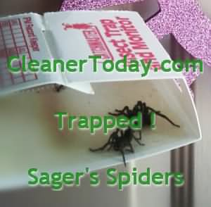 Brown Recluse Spider Traps from the South East