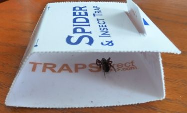 Spider Trap in action